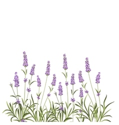 Wreath of lavender flowers vector