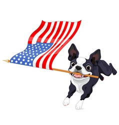 Boston Terrier Running Flag vector image vector image