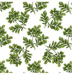 moringa seamless botanical pattern vector image vector image