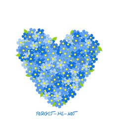 heart made of forget-me-not flowers vector image