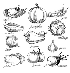 Set of various doodles hand drawn vegetables vector
