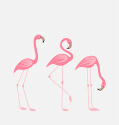 Tropical bird flamingos vector