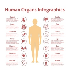 Human infographic set vector