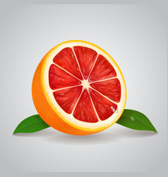 grapefruit realistic 3d with leaves vector image