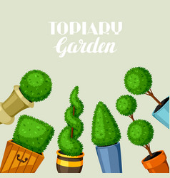 Boxwood topiary garden plants decorative trees in vector
