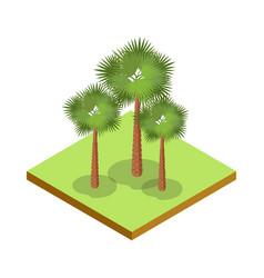 palm tree isometric 3d icon vector image