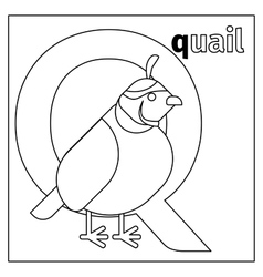 Quail letter Q coloring page vector image vector image