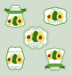 the avocado vector image