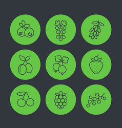 berries icons set in linear style vector image