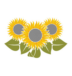 Flowers of sunflower vector