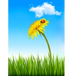 Dandelion on a blue sky and green grass background vector