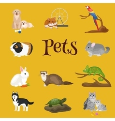 Home pets set cat dog parrot goldfish hamster vector