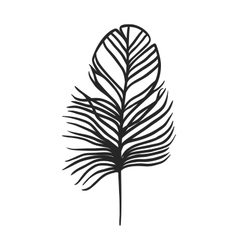 Decorative black feather vector image vector image