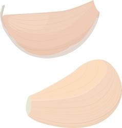 Garlic bulb on white background vector