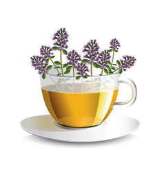 Aromatic tea with thyme in a transparent cup vector