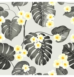 Plumeria flowers and jungle palm vector