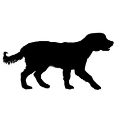 Spaniel dog silhouette on a white background vector