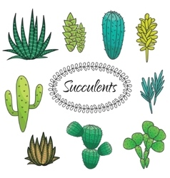 Succulents plant set botanical green vector