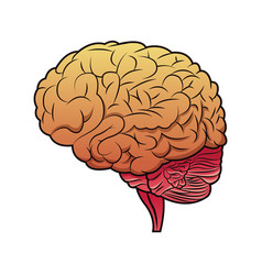 Brain mind idea creativity image vector