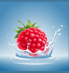 Raspberry in water splash vector