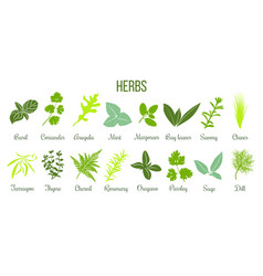 Big icon set of flat culinary herbs sage thyme vector