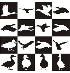 Black and white background with mallards vector