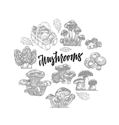 Edible mushroom icons round template vector