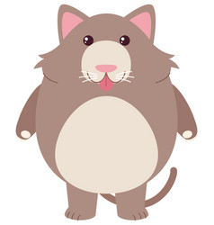 Gray cat on white background vector