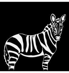 Hand-drawn pencil graphics zebra Engraving stencil vector image