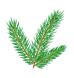 flat spruce tree branch isolated vector image