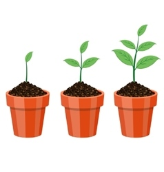 Plant growing in the pot vector