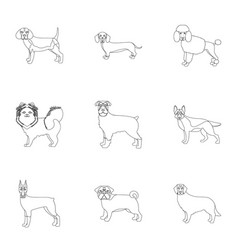 sheepdog dachshund bernard and other web icon vector image vector image