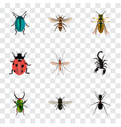 realistic bee ladybird wasp and other vector image