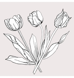 Bouquet of tulipsketch black and white vector