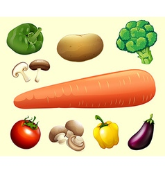 Various type of vegetables vector