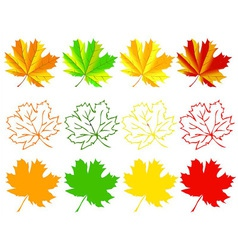 Set of autumn maple leaves vector