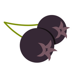 Fresh chokeberry or aronia berry icon isolated vector