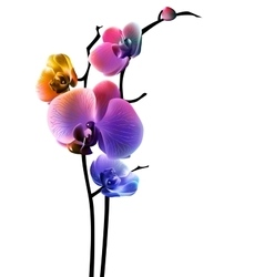 Orchid isolated flower  EPS10 vector image