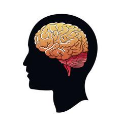 Head brain mind idea creativity vector