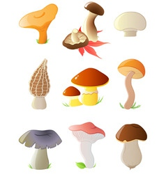 Forest mushrooms vector
