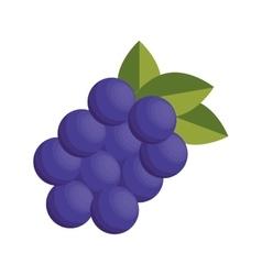 Fresh fruit isolated icon vector