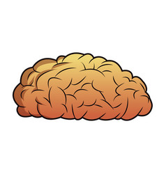 Brain mind idea knowledge image vector