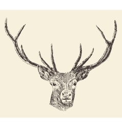 Deer Head Vintage Hand Drawn vector image