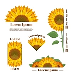 Sunflower banners and yellow sun flower vector