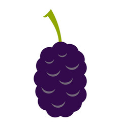 Fresh mulberry icon isolated vector