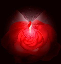 Rose fairy vector