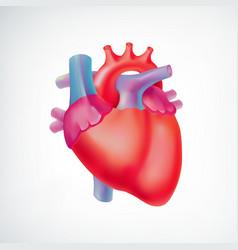medical light organ anatomic concept vector image vector image