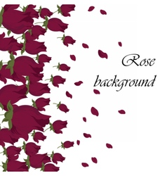 Pink Roses petals background vector image vector image