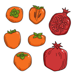 natural organic pomegranate and persimmons for vector image