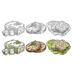 Set vegan and vegetarian food tofu seitan vector